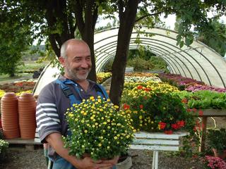 laffont-chrysanthemes