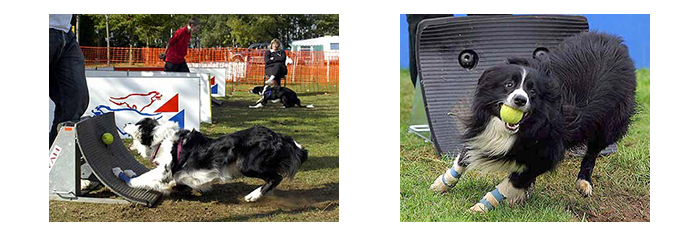 canin-flyball