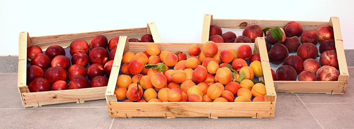 fruits-jacques-vieux-trèbes