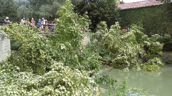 arbre-sur-canal-juillet2014