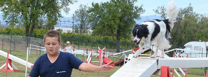 canin-agility- Trèbes sept2014