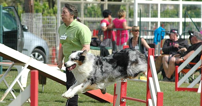 club canin agility 77