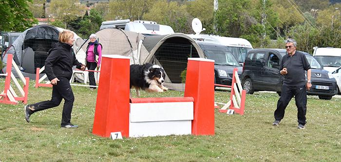 canin agility avril2016 2