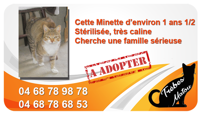 Chat a adopter mai 2019