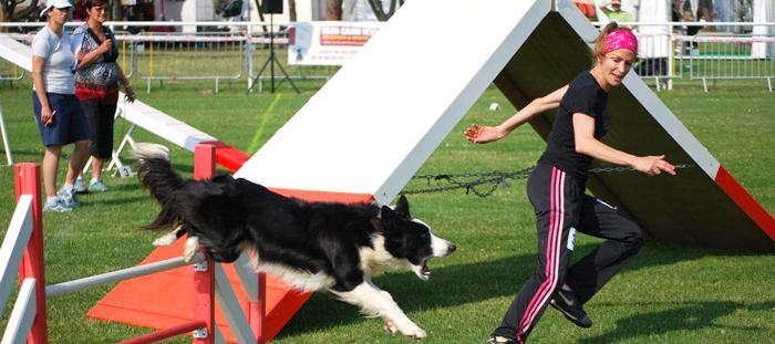 Canin Karine et Bebop