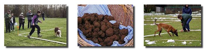 canin-truffes-dec2014
