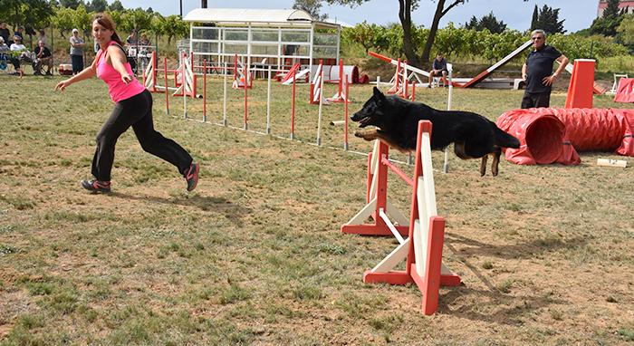 canins-agility sept2015 4