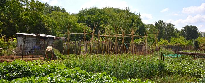 jardins de la Pépinière