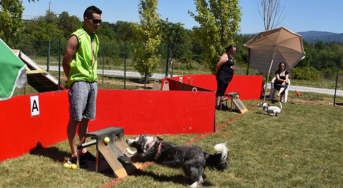 canin flyball trèbes