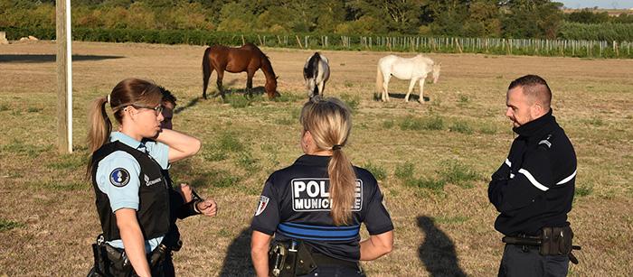 FD chevaux
