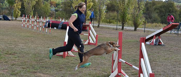 canin agility3
