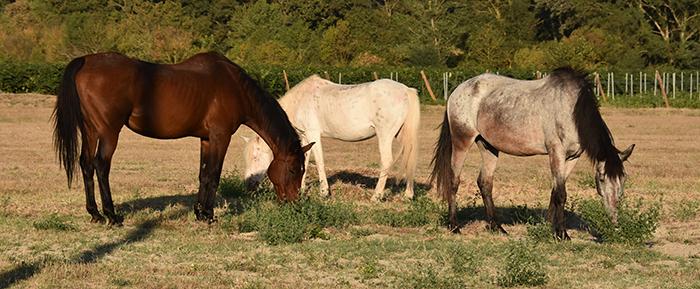 fd chevaux trèbes