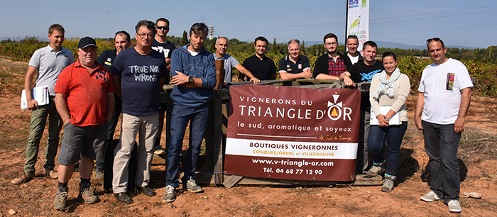 vignerons triangle d'or