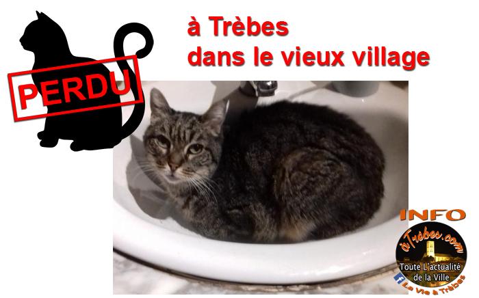 chat perdu 2