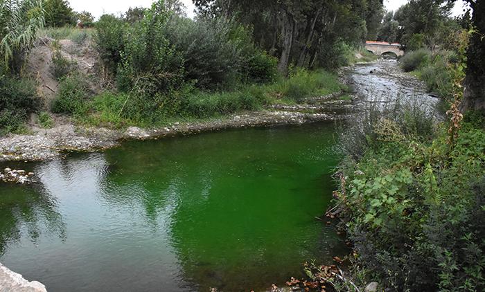 orbiel vert fluo